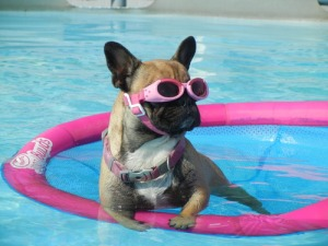 Chillin' in my water Doggles