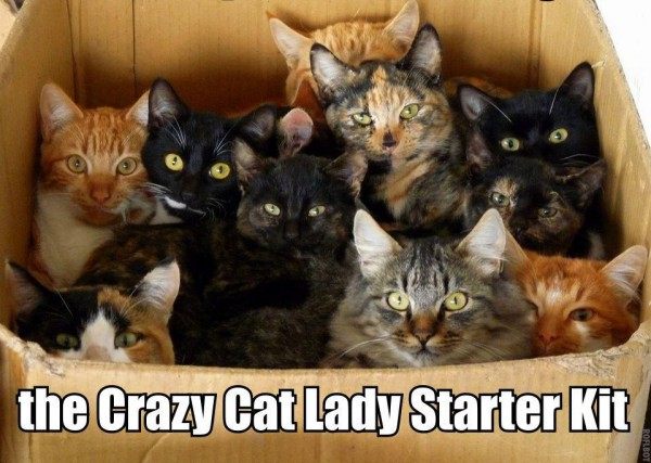 crazy cat lady starter kit revised