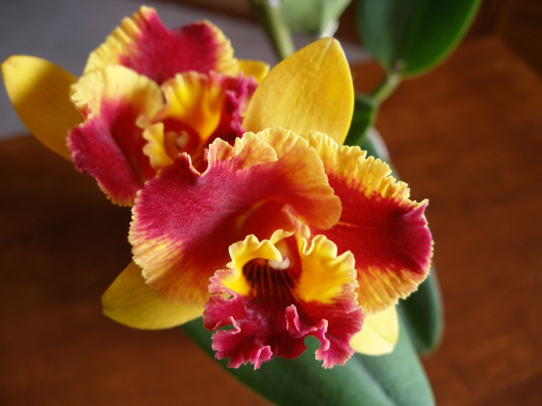 Paradise (Blc Lawless Freischutz x Slc Seagulls Laurel Hollow)