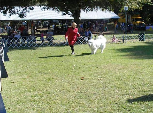 Show puppy with his breeder/handler