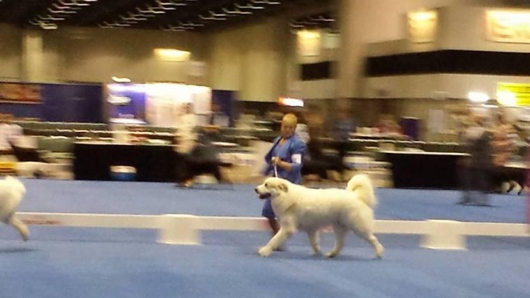 Winner's Dog & Best of Winners