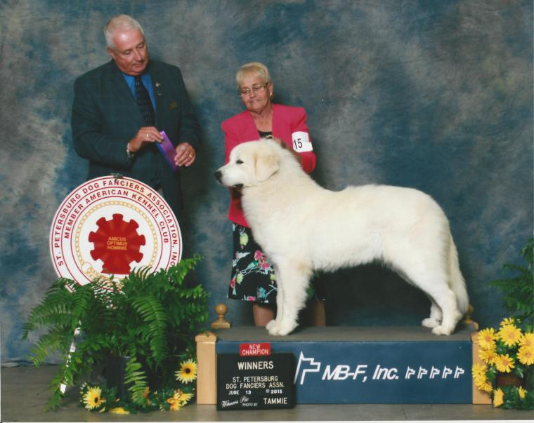 New Champion with our breeder/handler and Judge
